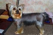 Фото собаки после стрижки